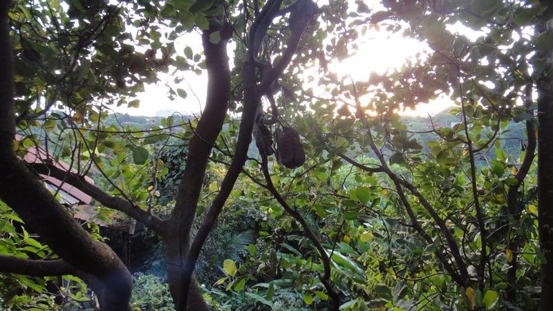 Treetop Eco Lodge