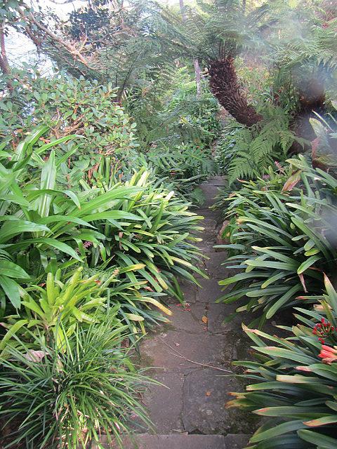 The lush hiking trail