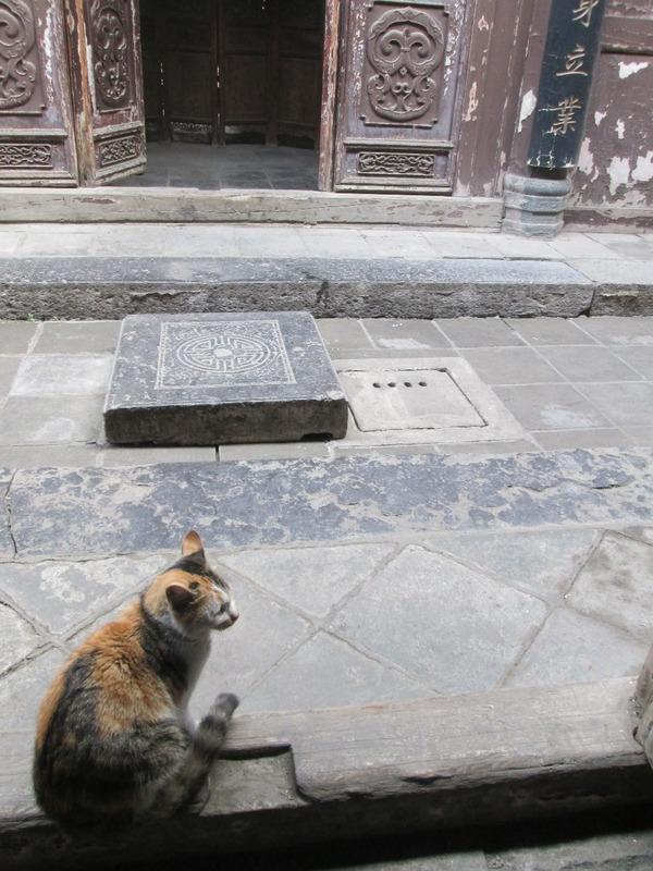 Folk house cat