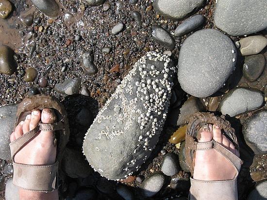 My feet vs. barnacles