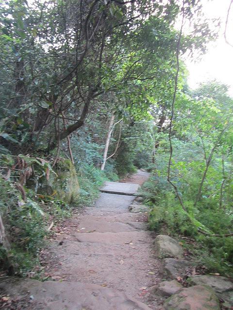Jungley