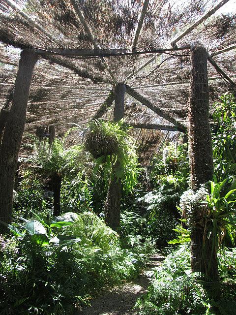 Cool indoor ish garden