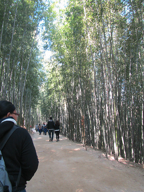 Nicole and bamboo
