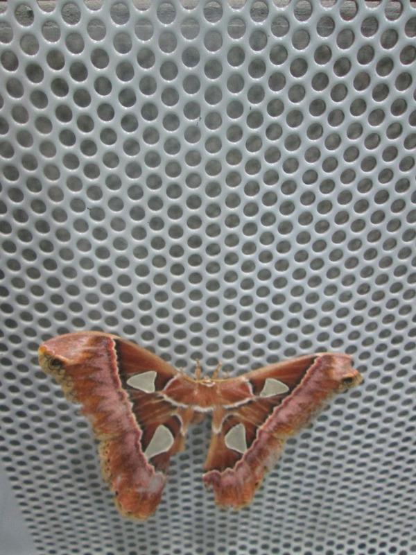 A giant moth on the bench