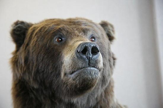Hello. I am a bear.