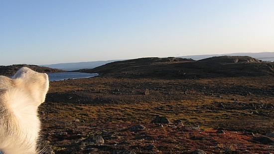 Siku and tundra