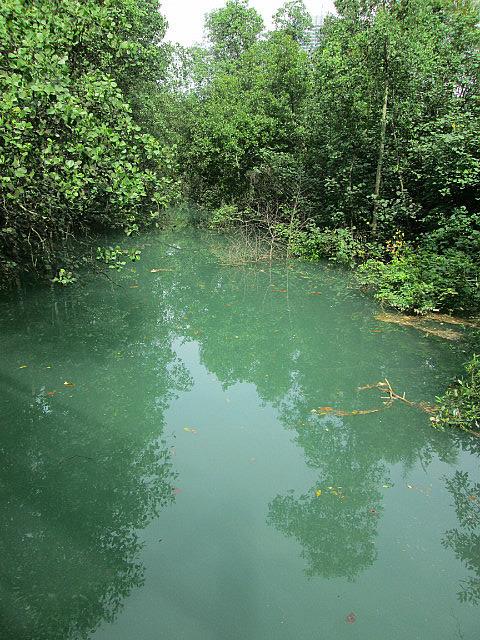 Labrador Park mangrove