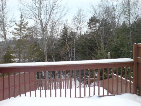 Shylo backyard/pool/porch