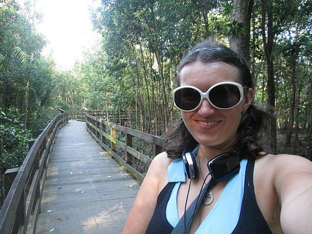 Pasir Ris Park mangrove