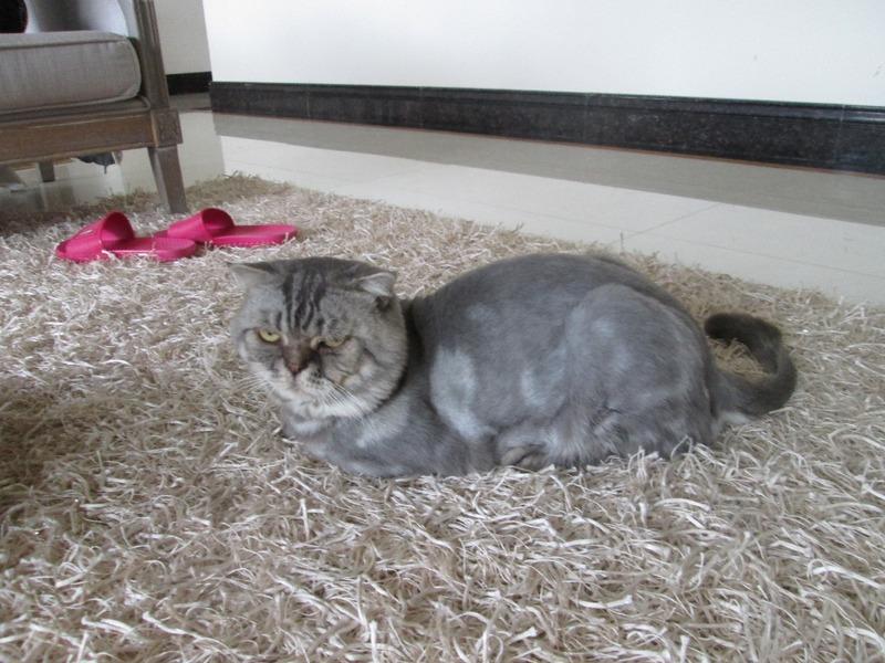 Diana's cat