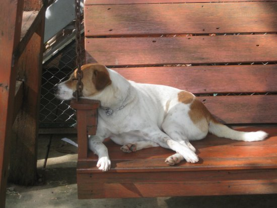 Dog on a bench 3