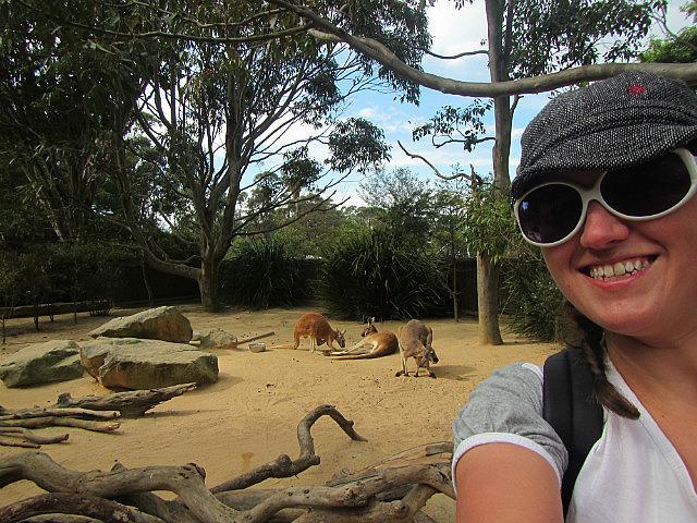 Me vs. Kangaroos