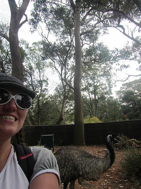 My friend the emu