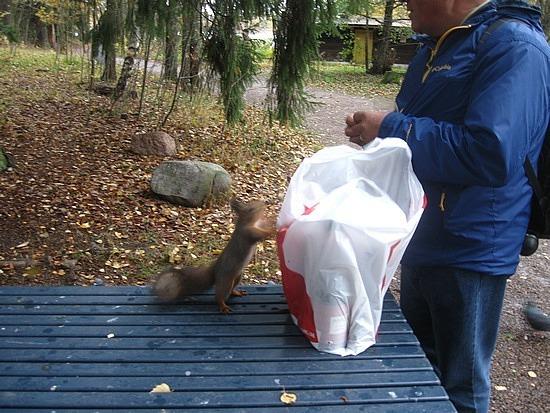 Vicious squirrel