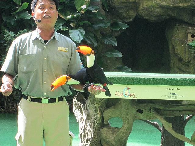 Toucan bird show
