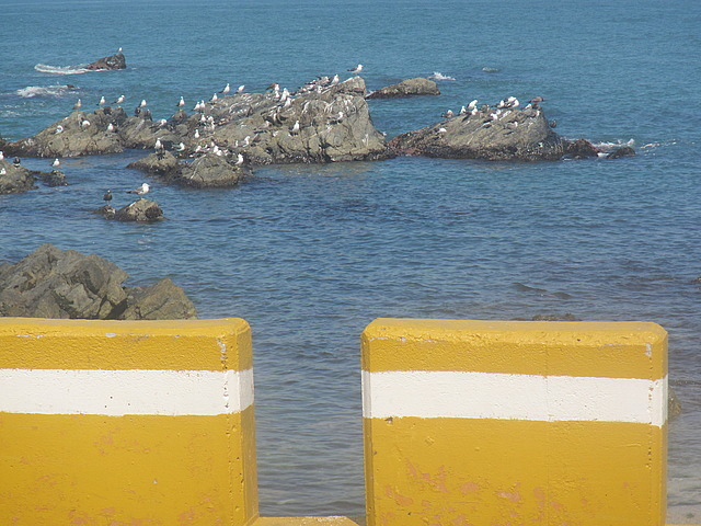 Rocks and seagulls