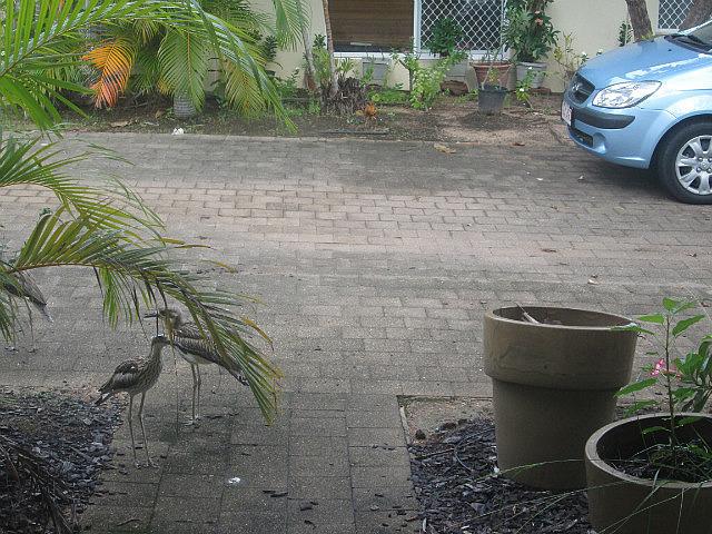 Birds at Eddie's house