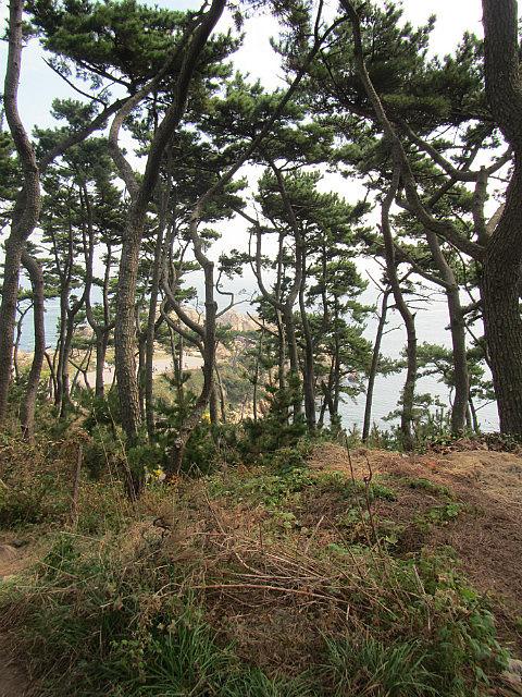 Ulsan forest