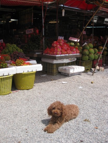 Dog at Klang Dong fruit market 3