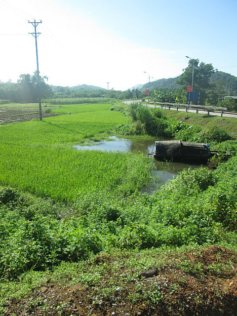 Rice field on the highway