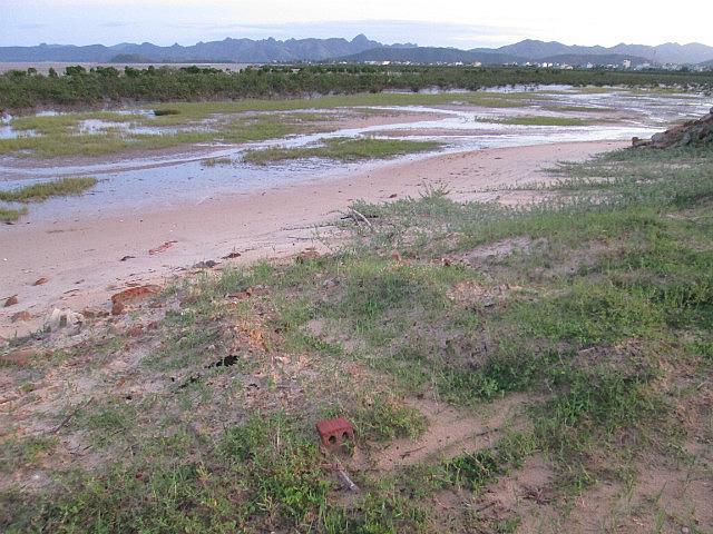 Quan Lan mangrove?