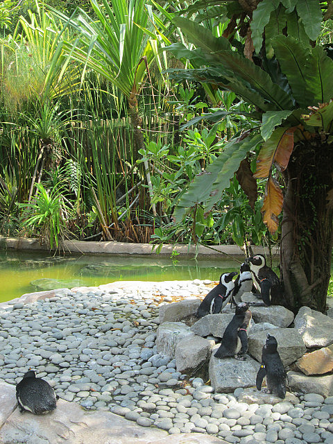 Penguins in the heat!