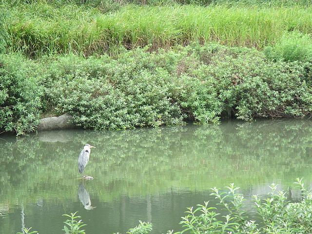 Some type of crane