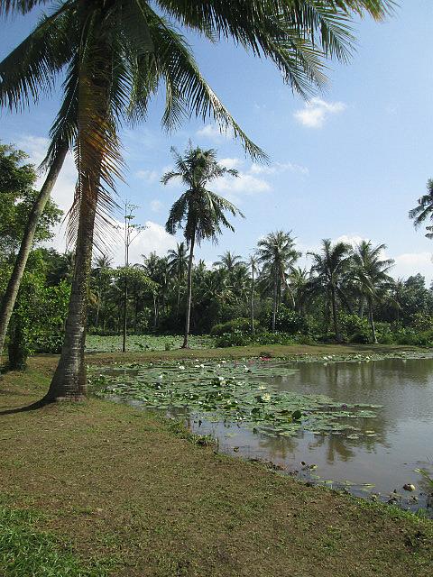 Palm trees on a pond