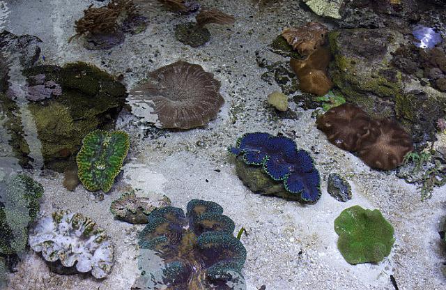 Coral reef?