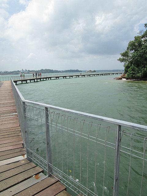 Coastal forest boardwalk