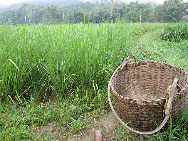 Rice with basket