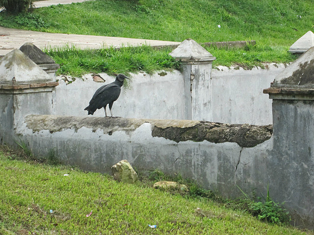Giant bird, a vulture???