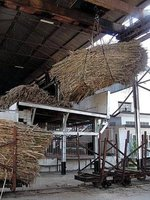 A sugar cane load
