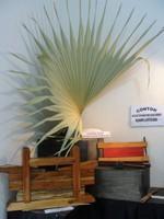 Lontar plam leaf