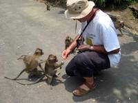 Cikakak Monkeys