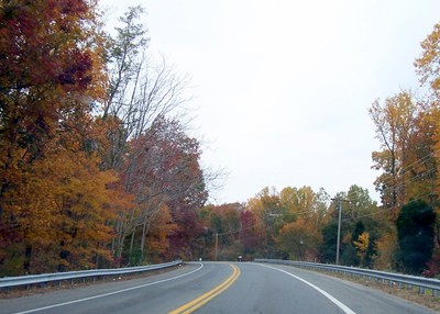 Road with colorful trees