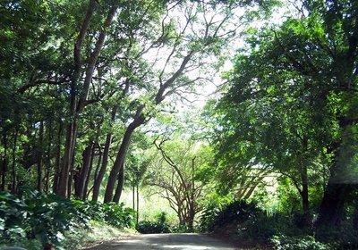 Road to St Nicholas Abby