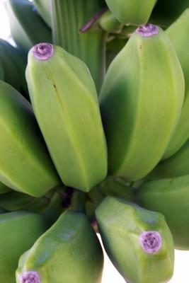 Bananas at the heliport