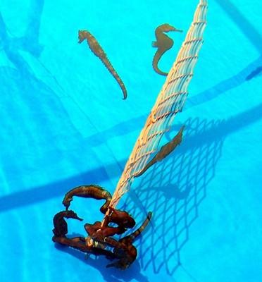 Adult seahorses