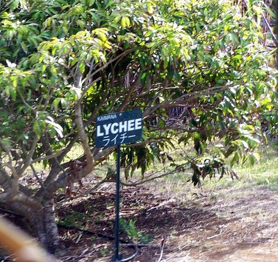 Lychee from the train