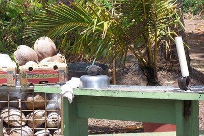 coconut husking area