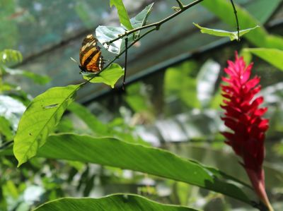 Butterfly up by enclosure top