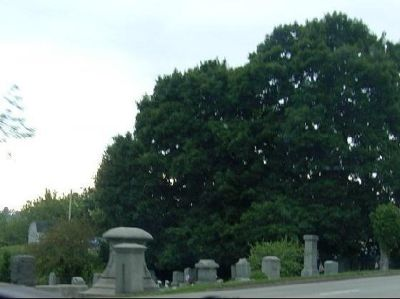 Cemetery from the car