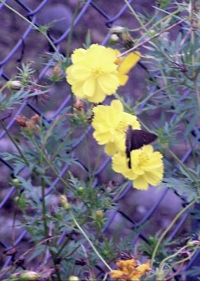 Roadside flower and butterfly