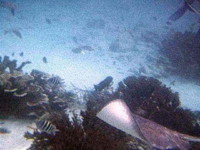 1763385-More_snorkeling_pictures_Caye_Caulker.jpg