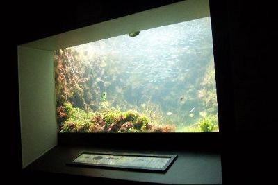 1788819-Another_aquarium_tank_Smiths_Parish.jpg