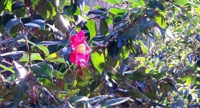 2281247-Elizabethan_Gardens_Roanoke_Island.jpg