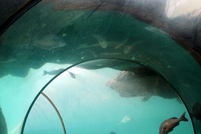 Inside the predator tunnel