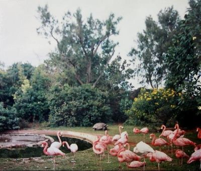 Flamingos and tortoise 1995