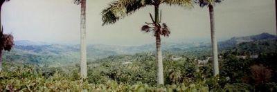 3441058-Welshman_Hall_Gully_Barbados.jpg